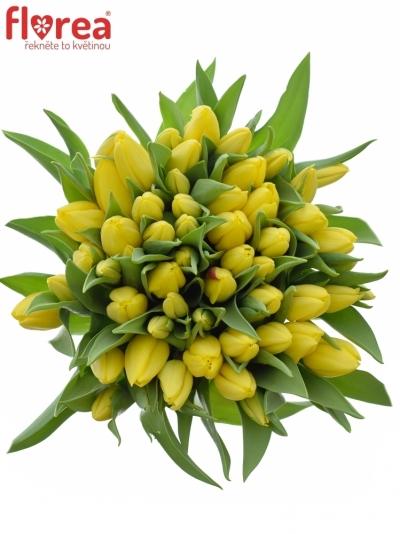 Kytice 55 žlutých tulipánů STRONG GOLD