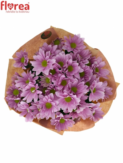 Kytice 7 chryzantém PINK SPRING
