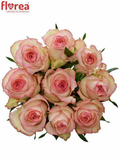 Kytice 9 bílorůžových růží JUMILIA 50cm