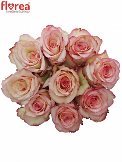 Kytice 9 bÍlorůžových růží TORMENTA