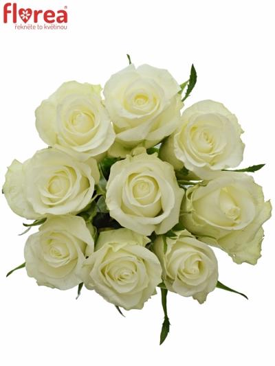 Kytice 9 bílých růží ASPEN 50cm