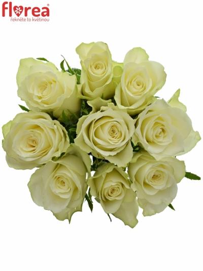 Kytice 9 bílých růží ATHENA 40cm