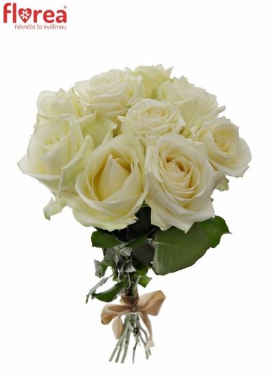 Kytice 9 bílých růží AVALANCHE  40cm
