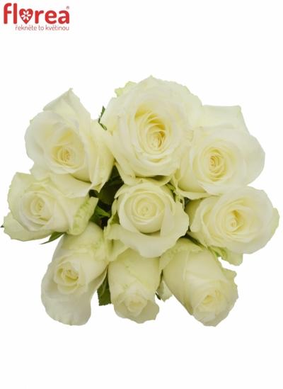 Kytice 9 bílých růží COUNTDOWN