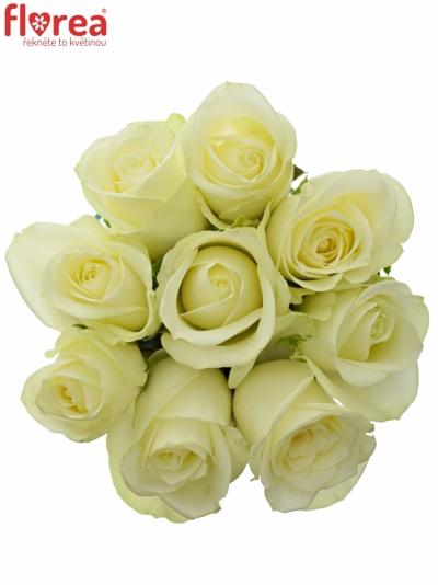 Kytice 9 bílých růží SNOWSTORM 50cm