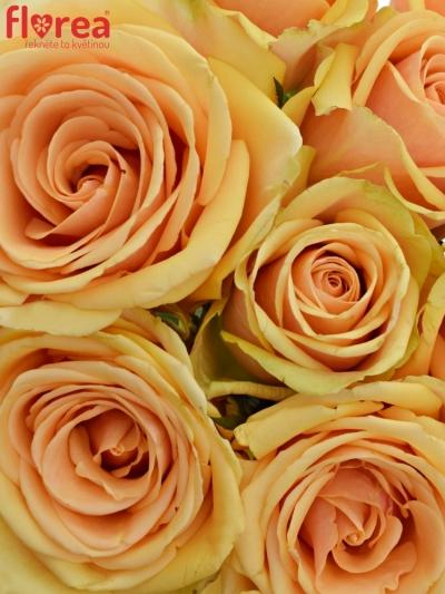 Kytice 9 čajových růží ALCHEMY