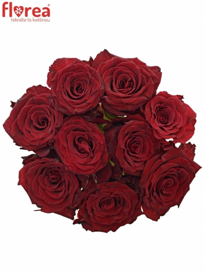Kytice 9 červených růží ABBA