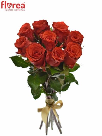 Kytice 9 červených růží BRIGHT TORCH