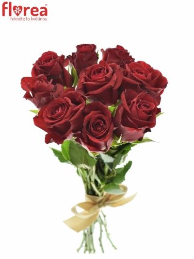 Kytice 9 červených růží FURIOSA 35cm