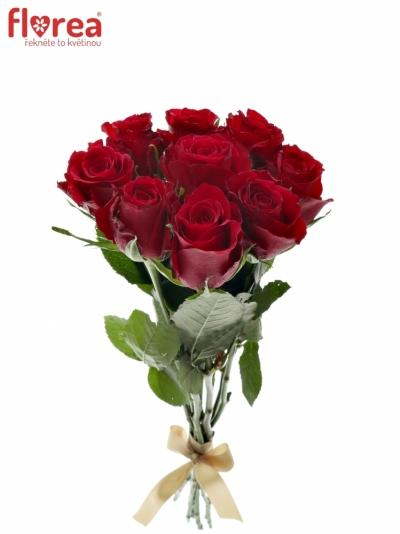 Kytice 9 červených růží NATURES RED