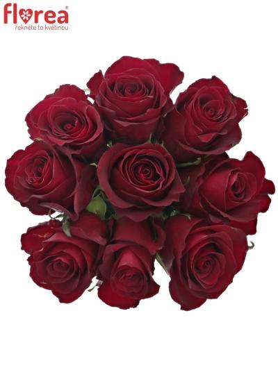 Kytice 9 červených růží NAZCA 35cm