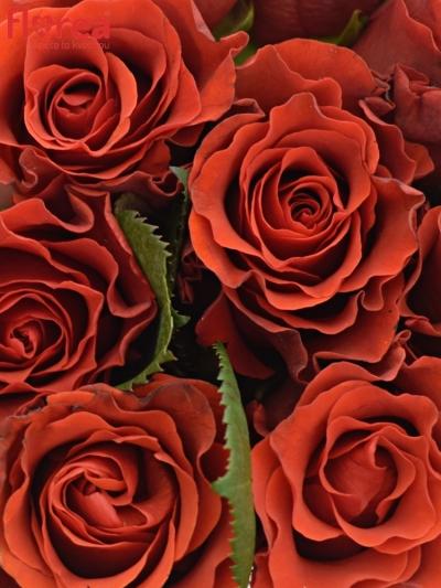Kytice 9 červených růží RED CORVETTE
