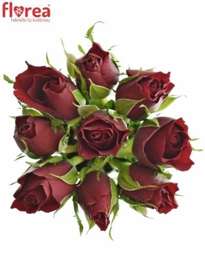 Kytice 9 červených růží VALENTINO 40cm