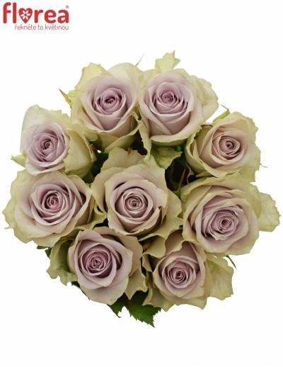 Kytice 9 fialových růží FIFTH AVENUE! 50cm