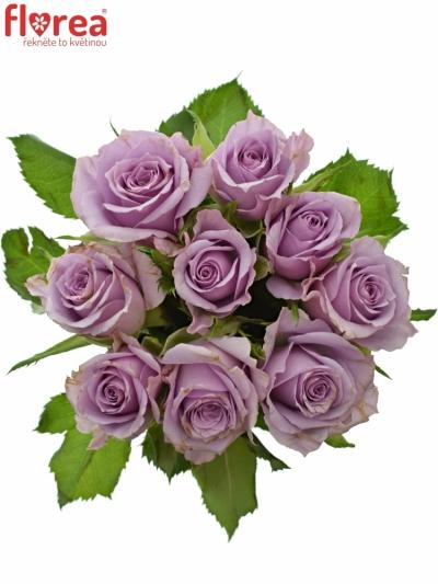 Kytice 9 fialových růží JAZZ 40cm