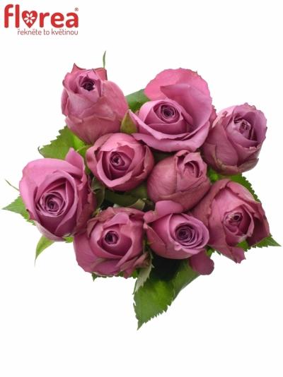 Kytice 9 fialových růží NEW ORLEANS 50cm
