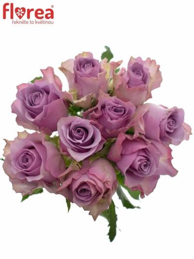 Kytice 9 fialových růží NIGHTINGALE 70cm