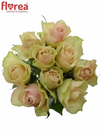 Kytice 9 krémovozelených růží LA BELLE 50cm