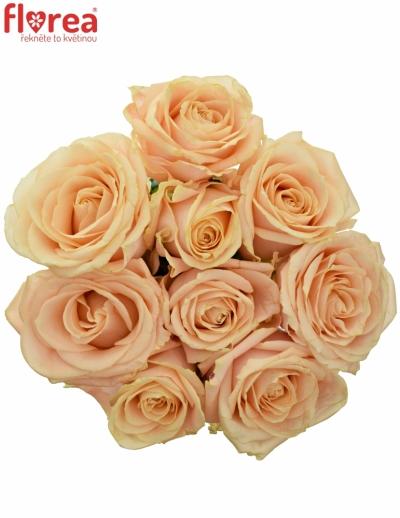 Kytice 9 krémových růží PEARL AVALANCHE+ 50cm