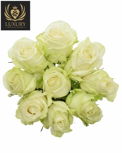 Kytice 9 luxusních růží ADALONIA 90cm