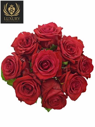 Kytice 9 luxusních růží RED EAGLE 60cm