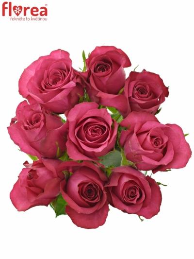Kytice 9 malinových růží GRAND EUROPE 40cm