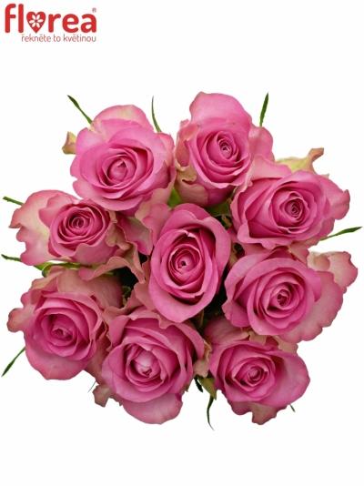 Kytice 9 malinových růží ROYAL JEWEL 50cm