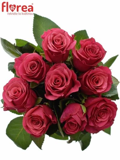 Kytice 9 malinových růží TACAZZI 50cm