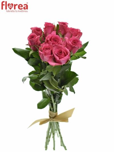 Kytice 9 malinových růží TENGA VENGA 40cm