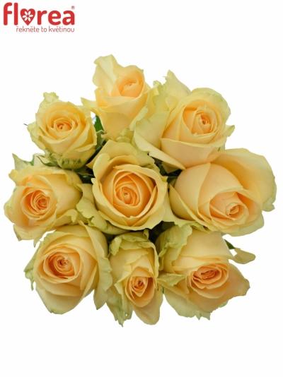 Kytice 9 meruňkových růží MAGIC AVALANCHE 50cm (M)