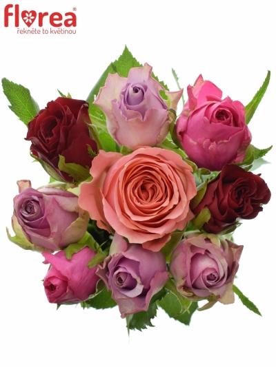 Kytice 9 míchaných růží ABERA 40cm