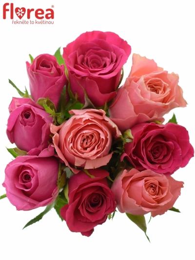 Kytice 9 míchaných růží ABERIA 40cm