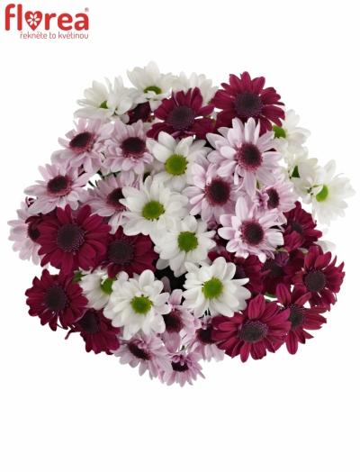 Kytice 9 míchaných chryzantém WHITE STRESSA