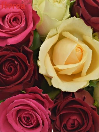 Kytice 9 míchaných růží AMALGITH