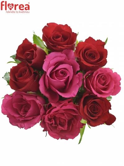 Kytice 9 míchaných růží GRACIANA 35cm
