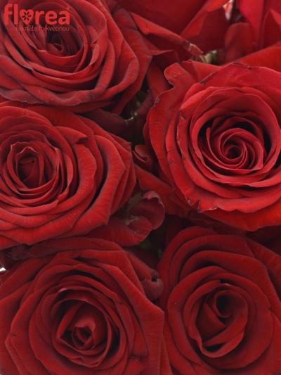Kytice 9 míchaných růží JOANNA 35cm