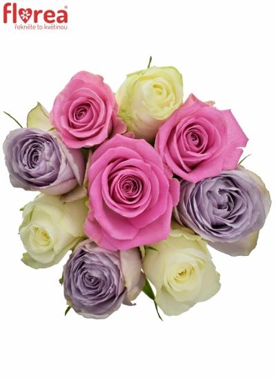 Kytice 9 míchaných růží LIGHT LORRIESS