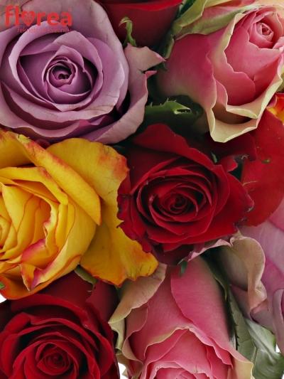Kytice 9 míchaných růží MIRIAM 50cm