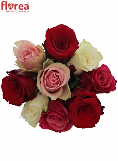 Kytice 9 míchaných růží RADWAN 50cm