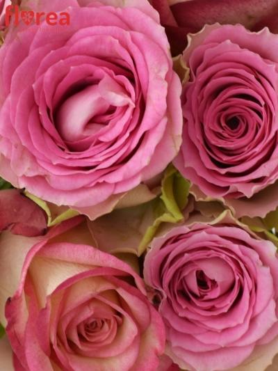 Kytice 9 míchaných růží TIMESTELLE