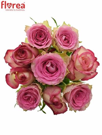 Kytice 9 míchaných růží TIMESTELLE 50cm
