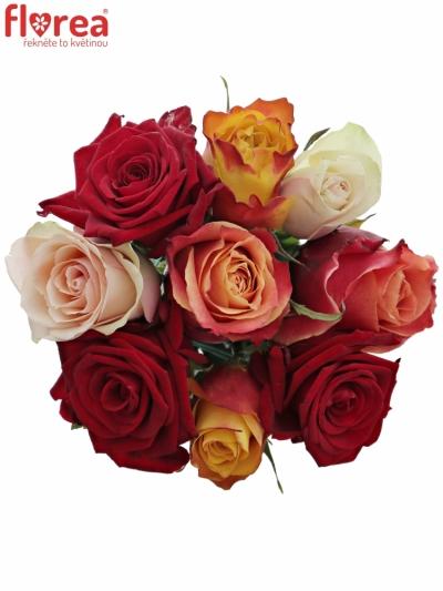 Kytice 9 míchaých růží PITTHEUS 50cm