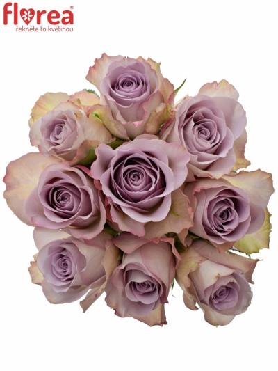 Kytice 9 modrofialových růží MEMORY LANE 40cm