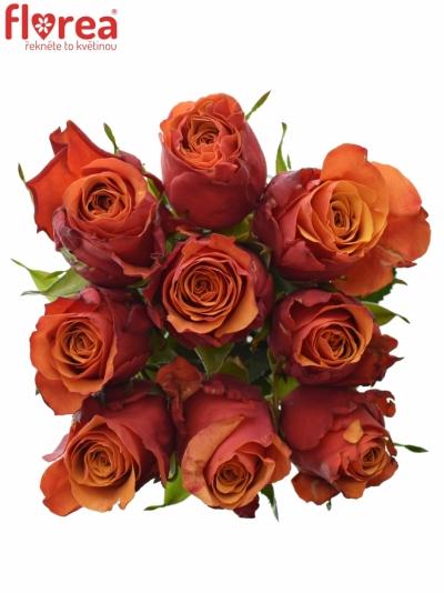 Kytice 9 oranžovočervených růží ESPANA 40cm