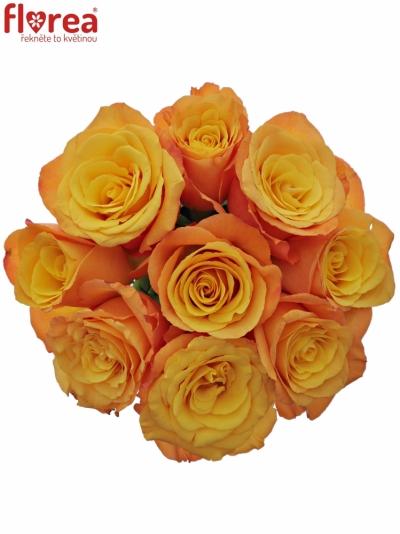 Kytice 9 oranžových růží CONFIDENTIAL 35cm