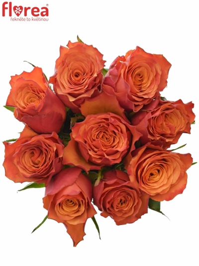 Kytice 9 oranžových růží DEVOTED