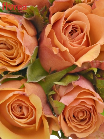 Kytice 9 oranžových růží JULIA 40cm