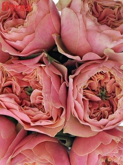 Kytice 9 oranžových růží KENSIN GARDENS! 50cm