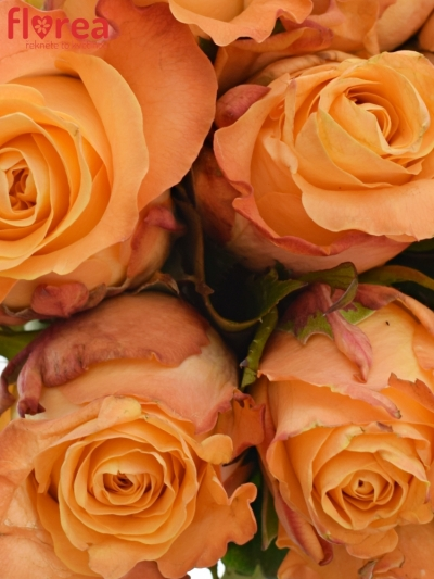 Kytice 9 oranžových růží MONALISA 50cm