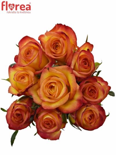 Kytice 9 oranžových růží OUTLAW! 50cm